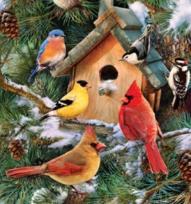 Pine Tree Birds 1719