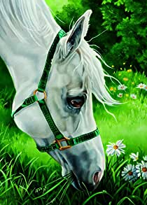 meadow horse