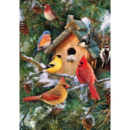 Pine Tree Songbirds